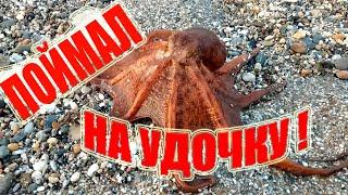 Как поймать осьминога на удочку Рыбалка в Турции