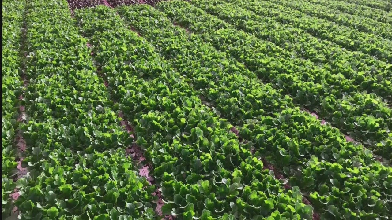 Revol Greens Grows Lettuce In MN 365 Days A Year