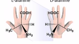AS level. B.2 Monosaccharides and disaccharides