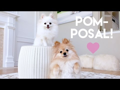 Pom posal  = best proposal ever !!!