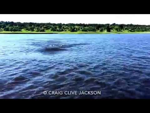 Hippo Charge on Chobe River Botswana - normal speed. Awesome but crazy dangerous.