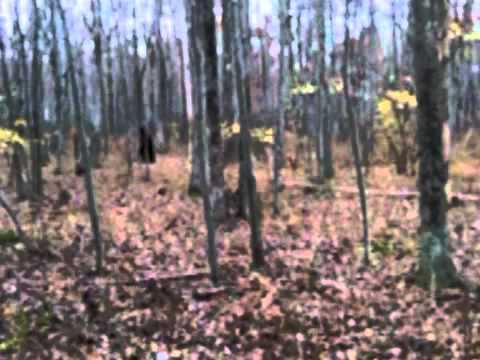 Real Bigfoot Footage from Pennsylvania