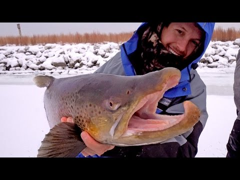 Ice Fishing For Giant Brown Trout - Ft. Eric Haataja - 4K