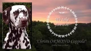 Christi ORMOND Coppola - We bid farewell