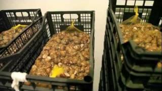 """Hodowla ślimaków - """"SlowFarm"""" - Przygotowanie Budynku"""