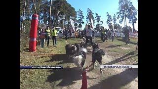 Красноярцы выиграли чемпионат Новосибирской области по ездовому спорту