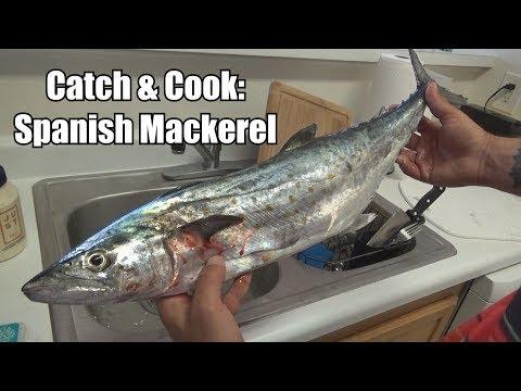 CATCH & COOK: Spanish Mackerel (...So Delicious)