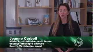 Ostéoarthrose - définition et prise en charge