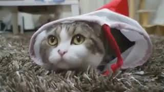 funny cat videos for kids .... funny cat videos try not to laugh ...funny cat videos youtube.mp4