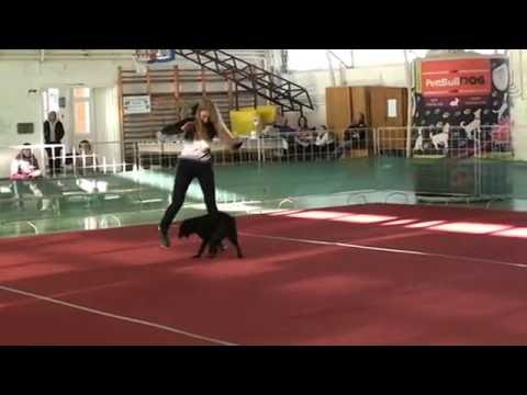 26. PettBull Dog Dancing Hungarian Open - 2016. Hatvan
