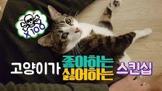 고양이가 좋아하는/싫어하는 스킨십을 알아보자!