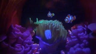 ºoº ニモのアトラクション ファインディングニモ ドリー サブマリンヴォヤッジ at CLディズニーランド Finding Nemo Submarine Voyage at Disneyland thumbnail