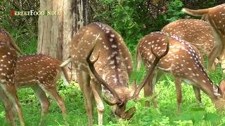 Mudumalai forest wild animals - Tamilnadu