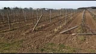 Tragico incidente vicino al bosco di Colemi, muore un 71enne