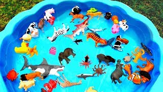 Learn Colors With Animals Pool Show for Children - Colours With Elephant and Cow for Kids thumbnail