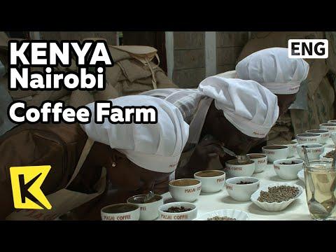 【K】Kenya Travel-Nairobi[케냐 여행-나이로비]커피농장, 커피 등급 심사/Coffee Farm/Harvest/Q-grader
