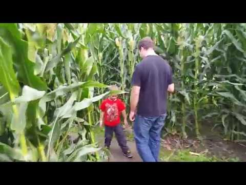 Washington State corn maze at Swan's Trail Farm in Snohomish