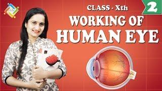 Human Eye 02 : Working on Eye
