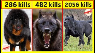 Dangerous dogs that are banned | Deadly dog breeds you need to know about