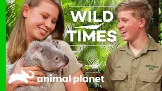 Meet Dexter The Cuddly Koala! | Wild Times