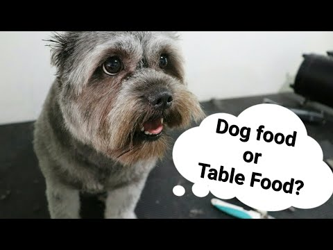 DOG FOOD OR TABLE FOOD? Which is better?