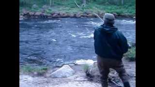 Fly fishing. Salmon 3.5 kg. The Kola Peninsula. July 2012.