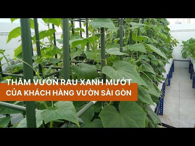 Thăm vườn rau sân thượng xanh mướt của khách hàng Vườn Sài Gòn