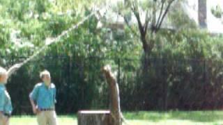 World's Highest Jumping Cat - 10ft+