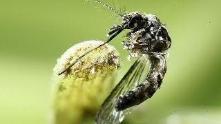 شاهد.. إنهاء حالة الطوارئ الدولية بشأن فيروس زيكا