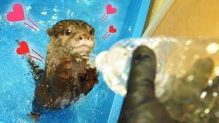 愛するカワウソのためにDIY。簡易シャワーをつくってみた!