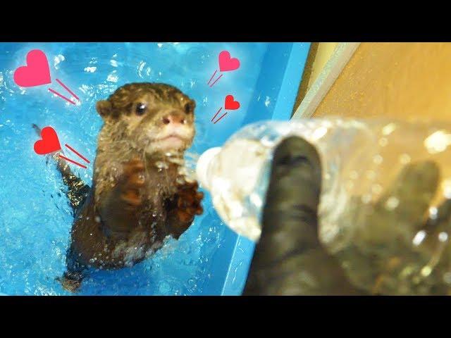 【カワウソとDIY】ビンゴと遊べるペットボトルシャワー作ってみた(【DIY】Plastic bottle shower for otter bingo)