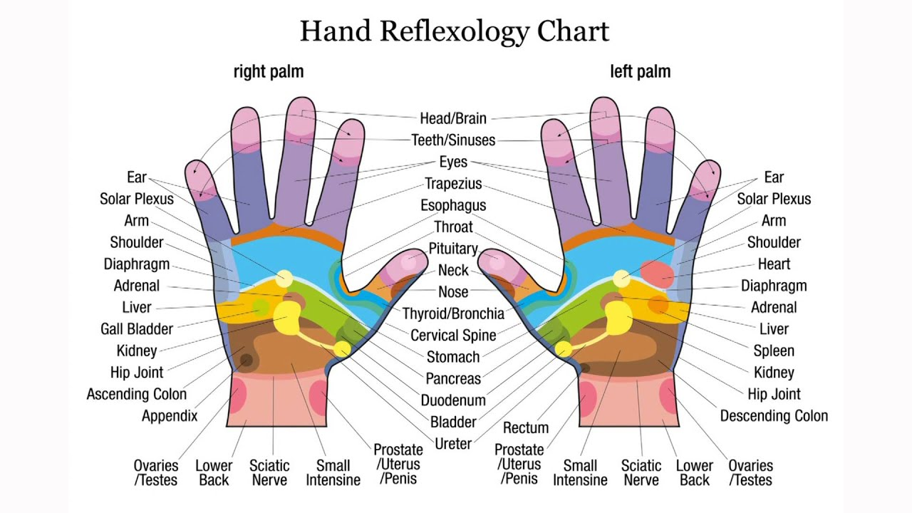 Exceptionnel Palmar reflexology - Acupressure - Hand massage - Map of trigger  EJ09