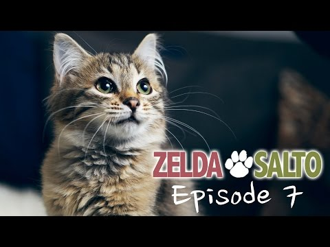 The Siberian cat Salto - Zelda&Salto