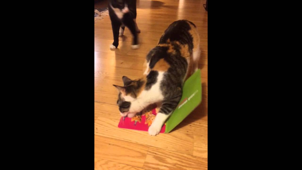 Cat Steals Singing Card