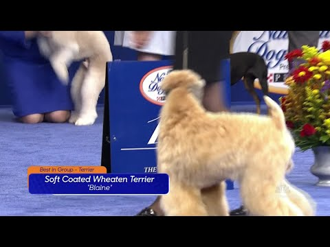 Thor wins the National Dog Show