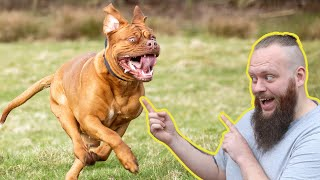 How To Turn AWFUL Recall To Perfect Recall Training With Your Dog    EXTREME CASE