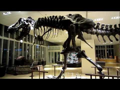 T-Rex - Discovery Channel Building, Silver Spring Maryland