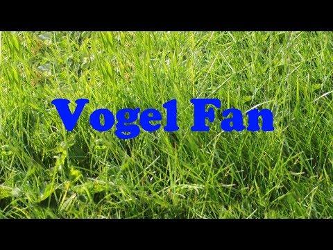 Vogel Fan l 2017 Bilder / Nistkasten Kohlmeise