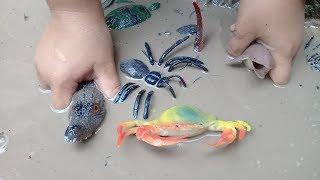 Đồ chơi trẻ em bé pin bắt con vật dưới bùn ❤ PinPin TV ❤ Baby toys water animals
