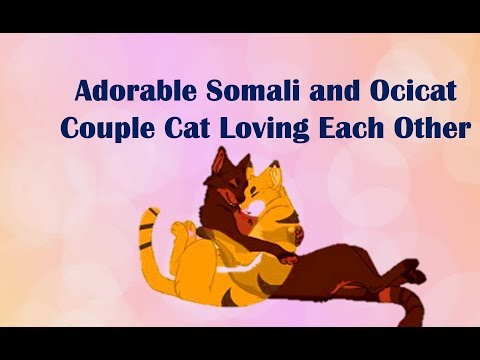 Adorable Somali and Ocicat Couple Cat Loving Each Other - Cat Love video 2017