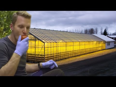 How Geothermal Energy Revolutionised Iceland's Greenhouses |