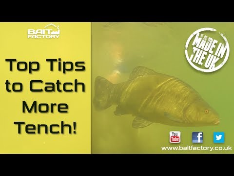 Tench Fishing Tips! Learn How To Catch More Fish!