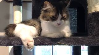 Cranky Prim Babysits The Cutest Kittens & Leia Not Happy With Mirror Kitten - Easter Kittens