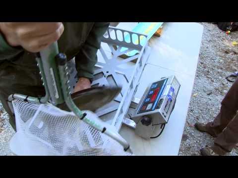 Skamania Steelhead Trout And Coho Salmon | Indiana DNR