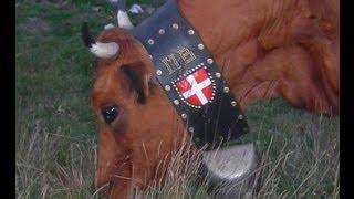 Vaches tarines à sonnettes (cloches) en Chartreuse