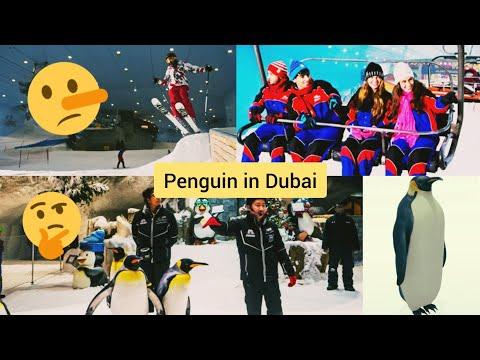 "🐧 Penguin in Dubai ""Emirates Mall"" 🤔🧐🙄   Ski Dubai 🎿"