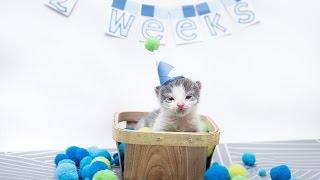 Tidbit the Orphan Kitten at 20 Days Old thumbnail
