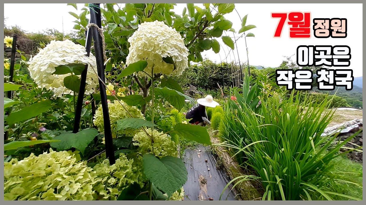 7월에 피는꽃 중에서 노지월동 되는꽃과 노지월동 안되지만 꼭 심는꽃, 그리고 법면용으로 생명력이 잡초처럼 강한꽃3가지 추천