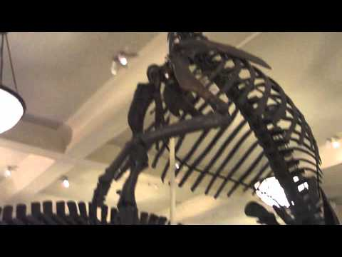 Hall of Dinosaurs: The Ornithischians