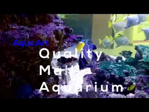 Quality Mall Mega Marine Aquarium
